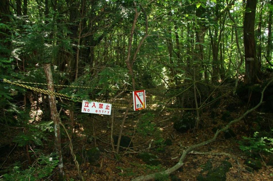 Таблички, размещенные перед входом в зеленый густой лес