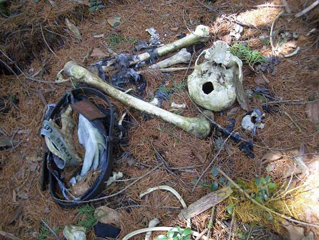 """Скелет и одежда молодого человека в """"лесу самоубийц. Самые страшные места на планете."""