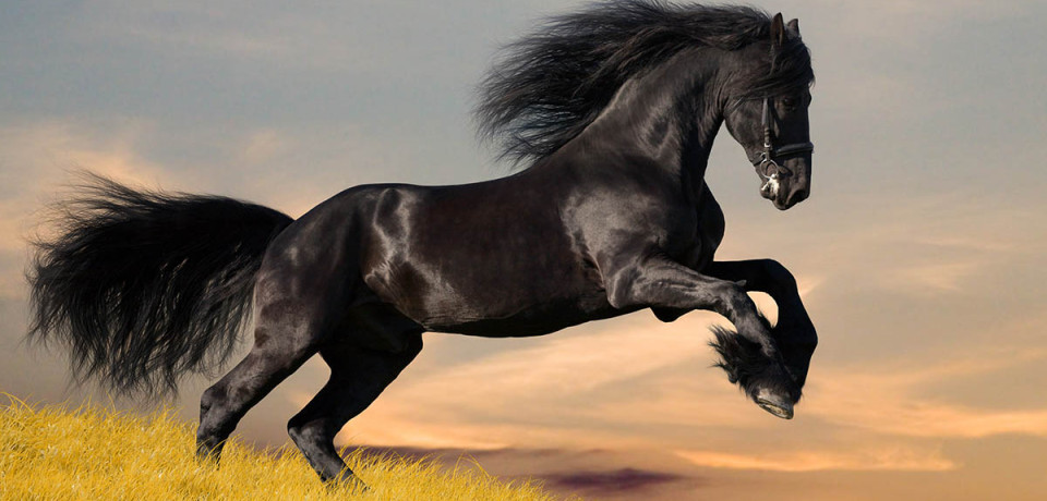 «Вечная дружба» — стихотворение из цикла «Стихи Артура»